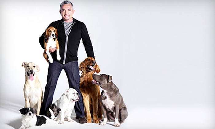 Cesar Millan Live! - The Dome at Toyota Presents Oakdale Theatre: $35 to See Cesar Millan Live! at Toyota Presents Oakdale Theatre on Saturday, July 13, at 7:30 p.m. (Up to $95 Value)