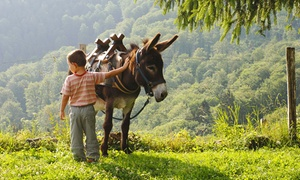 BEAU NEZ D'ANE: Balade à dos d'ânes de 2 h pour 2 enfants accompagnés et visite de la ferme pédagogique à 19,90 € chez Beau Nez d'Ane