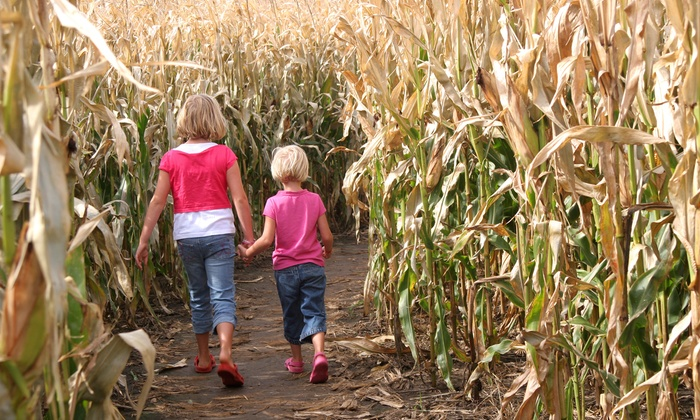 Rosedale Farms Winery - East Weatogue: $27 for a Corn Maze Package with Apples and Doughnuts for Four at Rosedale Farms Winery ($52 Value)