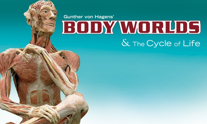 "Milwaukee Public Museum - Milwaukee Public Museum: ""Body Worlds & The Cycle of Life"" for Two at the Milwaukee Public Museum, May 31–June 20, 2014 (Up to 50% Off)"
