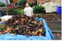 Flowers Yard Work: $30 for $60 Worth of Lawn and Garden Care — Flowers Yard Work