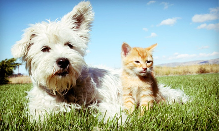 Paw Prints New York - New York City: $25 for $50 Worth of Dog Walks and Pet-Sitting from Paw Prints New York