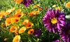 Jordan's Flowers - Grimsby: $10 for $20 Worth of Plants, Flowers, and Shrubs at Jordan's Garden Store in Grimsby