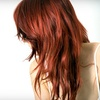 Up to 54% Off  Haircut Package in Noblesville