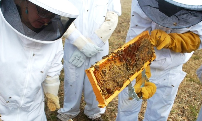 Round Rock Honey - Porter: Three-Hour Introductory Beekeeping Class for One or Two at Round Rock Honey (Up to 66% Off)