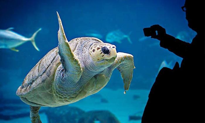 Family Explorer Annual Pass Adventure Aquarium Groupon