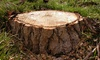 51% Off from Arbor Ops Stump Grinding