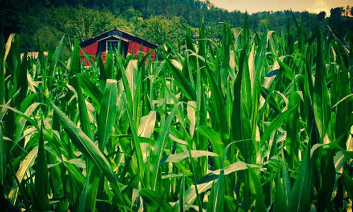 Pigeon Forge Corn Maze - 2: $12 for Visit to Pigeon Forge Corn Maze for Two (Up to $24 Value)