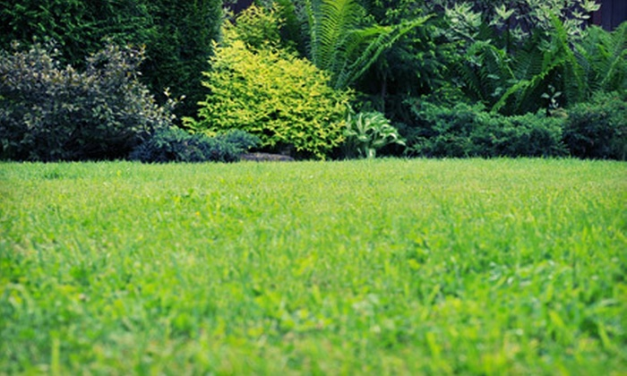 The Yard Gators - St. Augustine: Lawn Aeration for a Yard Up to 6,000 or 11,000 Square Feet from The Yard Gators (51% Off)