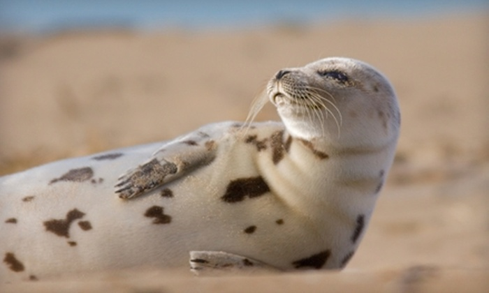 Save the Bay - Newport: One- or Two-Hour Seal-Watching Tour for Two from Save the Bay (Half Off). Four Options Available.