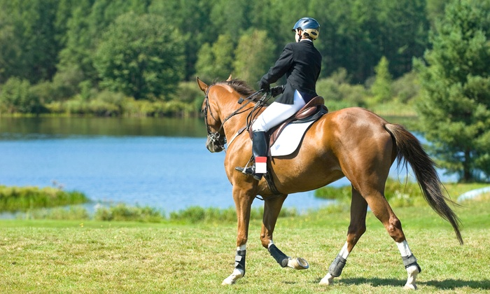 Arundel Hill Farms - Bay Pointe: One Month of Group Lessons & Practice Rides or One Half-Day of Summer Camp at Arundel Hill Farms (Up to 55% Off)
