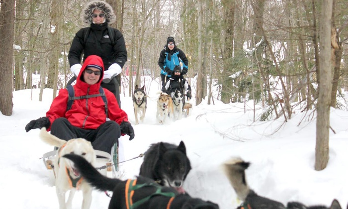 Toronto Adventures Inc. - Multiple Locations: Intro to Dog-Sledding Adventure Bus Day Trip for 1, 2, or 10 from Toronto Adventures Inc. (Up to 42% Off)