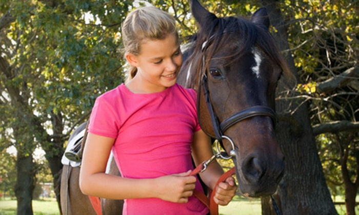 Bella Oaks Stables - Alhambra Valley: $55 for One Month of Horse-Apprenticeship Classes at Bella Oaks Stables ($135 Value)