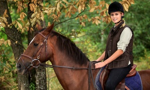 Old Town Riding School t/a Boxmoor Showjump Ltd: One or Three One-Hour Lessons for One or Two at Old Town Riding School (Up to 76% Off)