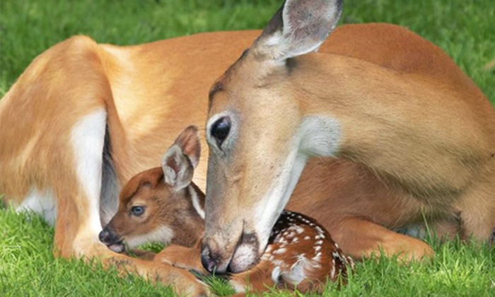 Fawn-Doe-Rosa Wildlife Educational Park - Saint Croix Falls: $16 for All-Day Visit for Four to Fawn-Doe-Rosa Wildlife Educational Park (Up to $32 Value)