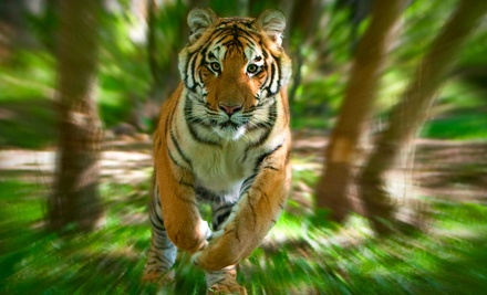 Admission for 2 (a $40 value) - Bowmanville Zoo in Bowmanville