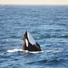 Chris' Whale Watching Tours – Up to 29% Off