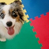 52% Off Doggy Daycare