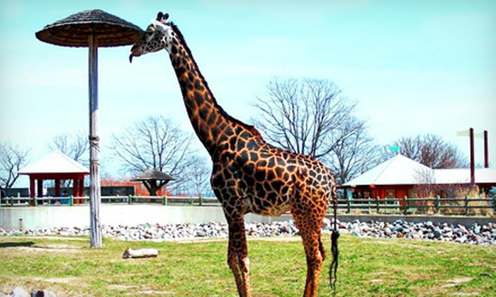 Racine Zoo - Racine: $45 for an 18-Month Family Membership to the Racine Zoo ($90 Value)