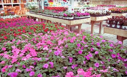 $50 Groupon to Stadler Nurseries - Stadler Nurseries in Frederick