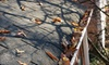 White Lion - Eugene: Gutter Cleaning with Optional Moss Removal or Moss Treatment from White Lion Moss Removal (Up to 51% Off)