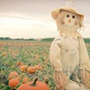55% Off Corn Maze and Pumpkin Patch Outing