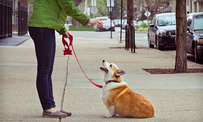 AKA-K9 - Langley: 90-Minute Mini Dog-Training Lecture or One or Three 60-Minute Private Coaching Sessions from AKA-K9 (Up to 72% Off)