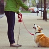Up to 72% Off Dog Training from AKA-K9
