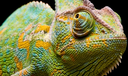 Entry for Two or Four Adults, or Two Adults and Two Kids to the Northwest Reptile Expos On May 3 (Up to 58% Off)