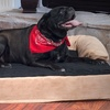 PAW Orthopedic Memory-Foam Pet Bed with Bolster