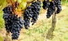 Up to 55% Off Winery Tour at Molon Lave Vineyards