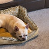Snoozy Sled Bed for Pets