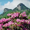 Grandfather Mountain – Up to 44% Off Visit
