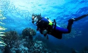 Tauchparadies Oranienburg: Open-Water-Diver oder Nitrox-Tauchkurs inkl. Theorie und Leih-Tauchausrüstung im Tauchparadies Oranienburg ab 45 €