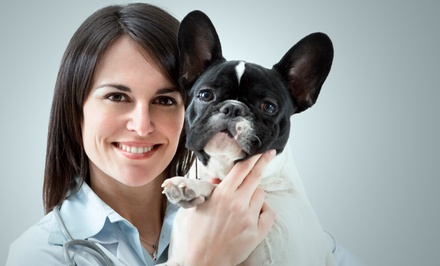 Annual Wellness Exam Package for One Dog or Cat at Dogwood Animal Hospital (Up to 53% Off)