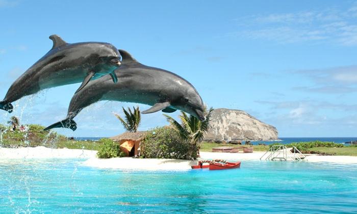 Sea Life Park - Waimanalo: Single-Day Admission or Sea Lion Swim at Sea Life Park (Up to 27% Off)