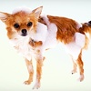 Up to 56% Off Dog Grooming Services