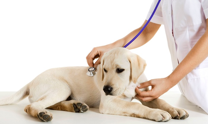 Modern Health Veterinary Hospital - Northeast Grand Rapids: $25 for a Vet Exam and Heartworm Test for a Dog at Modern Health Veterinary Hospital ($87 Value)