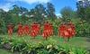 Halau i Ka Pono - Oak Park: Two or Four Hawaiian-Hula Dance Lessons at Halau i Ka Pono (Up to 52% Off)