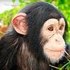 Half Off at Suncoast Primate Sanctuary