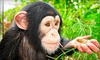 Suncoast Primate Sanctuary - Between Alderman Rd. & Klosterman Rd.: Monkey-Feeding Experience for Two or Four at Suncoast Primate Sanctuary (Half Off)