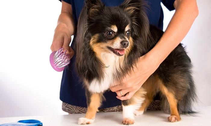 Side Kick Dog Training - Springfield: Dog Grooming at Side Kick Dog Training (Up to 52% Off). Four Options Available.
