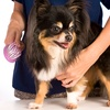 Up to 52% Off Dog Grooming