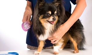 Dog Grooming And Supplies: Grooming Services from Dog grooming and supplies (44% Off)