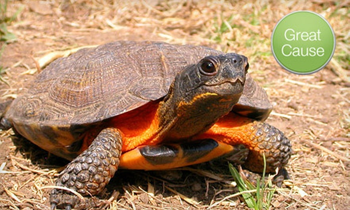 American Tortoise Rescue - American Tortoise Rescue: If 45 People Donate $10, Then American Tortoise Rescue Can Build a Raised Vegetable Garden to Feed Rescued Turtles
