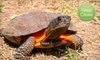 $10 Donation to Help American Tortoise Rescue