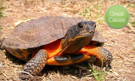 $20 Donation to American Tortoise Rescue - American Tortoise Rescue in Malibu