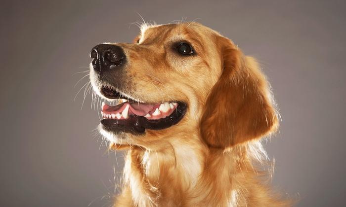 The Pet House Clinic - Miami Beach: Dental Care for a Pet at The Pet House Clinic (Up to 57% Off). Two Options Available.
