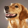 Up to 61% Pet Dental Care