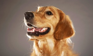 The Pet House Clinic: Dental Care for a Pet at The Pet House Clinic (Up to 57% Off). Two Options Available.